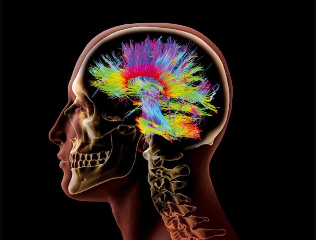 Cartografiando el cerebro.lecoolvalencia