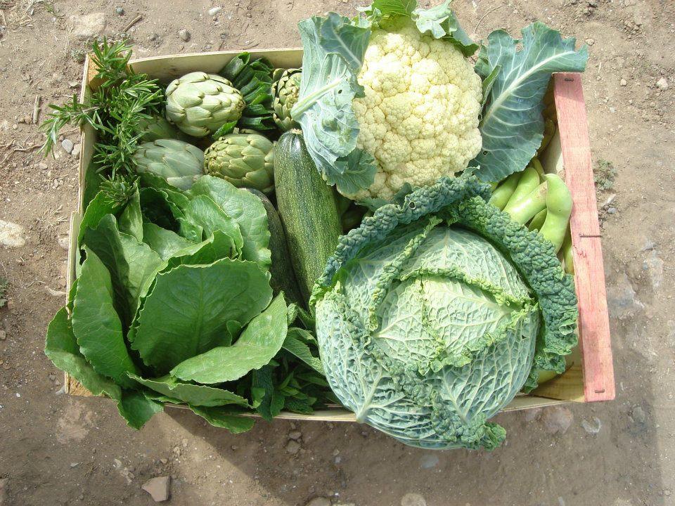 Las verduras que se envían se recolectan al momento para mantener su frescura